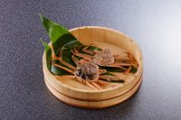 セコガニ(メス・大小比較)